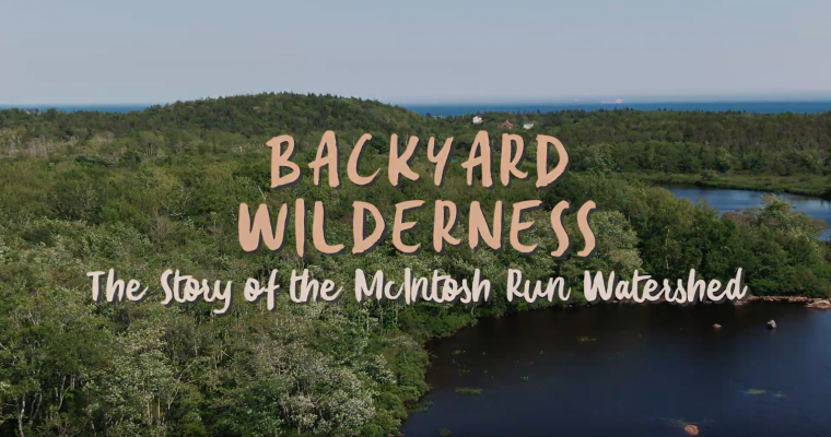 Watch Backyard Wilderness (7min version)